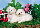 PUP 27 FA0005 01