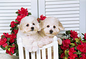 PUP 27 FA0006 01