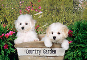 PUP 27 FA0007 01