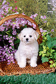 PUP 27 FA0013 01