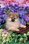 PUP 27 FA0017 01
