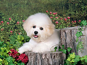 PUP 27 FA0022 01