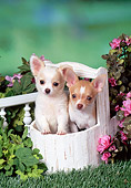 PUP 27 FA0028 01