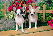 PUP 27 FA0029 01