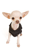 PUP 27 JE0004 01