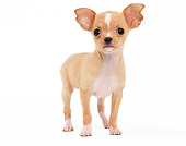 PUP 27 JE0006 01
