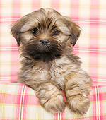 PUP 27 JE0007 01