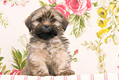 PUP 27 JE0008 01