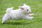 PUP 27 JE0015 01