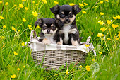 PUP 27 JE0016 01