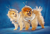 PUP 27 MQ0001 01