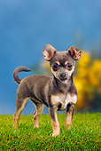 PUP 27 PE0002 01