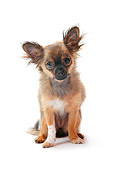 PUP 27 PE0006 01