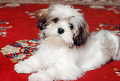 PUP 27 RK0037 09