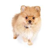 PUP 27 RK0114 01
