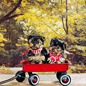 PUP 27 RS0024 02