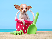 PUP 27 XA0003 01