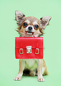 PUP 27 XA0006 01