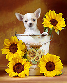 PUP 27 XA0007 01