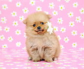 PUP 27 XA0011 01
