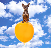 PUP 27 XA0012 01