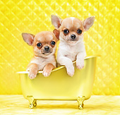 PUP 27 XA0016 01