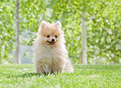 PUP 27 YT0033 01
