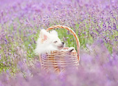 PUP 27 YT0034 01