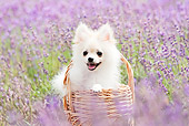 PUP 27 YT0035 01