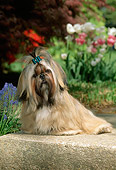 PUP 27 CE0001 01