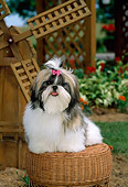 PUP 27 CE0002 01