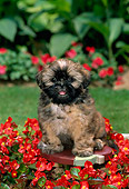 PUP 27 CE0005 01