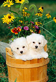 PUP 27 CE0006 01