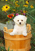 PUP 27 CE0007 01