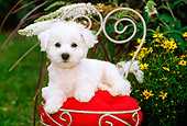 PUP 27 CE0009 01