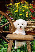 PUP 27 CE0010 01