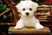 PUP 27 CE0011 01