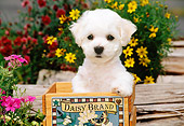 PUP 27 CE0013 01