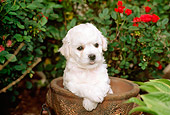 PUP 27 CE0015 01