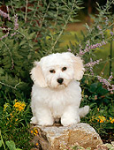 PUP 27 CE0017 01
