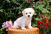 PUP 27 CE0019 01