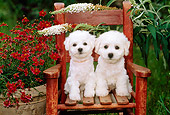 PUP 27 CE0021 01