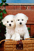 PUP 27 CE0023 01