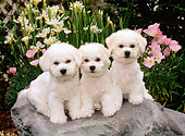 PUP 27 CE0026 01