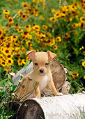 PUP 27 CE0033 01