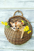 PUP 27 CE0040 01