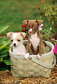 PUP 27 CE0042 01