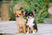 PUP 27 CE0043 01