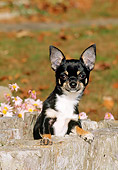 PUP 27 CE0045 01