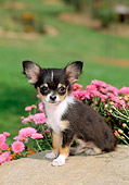 PUP 27 CE0046 01